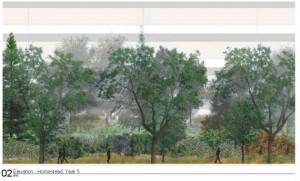 Original forest